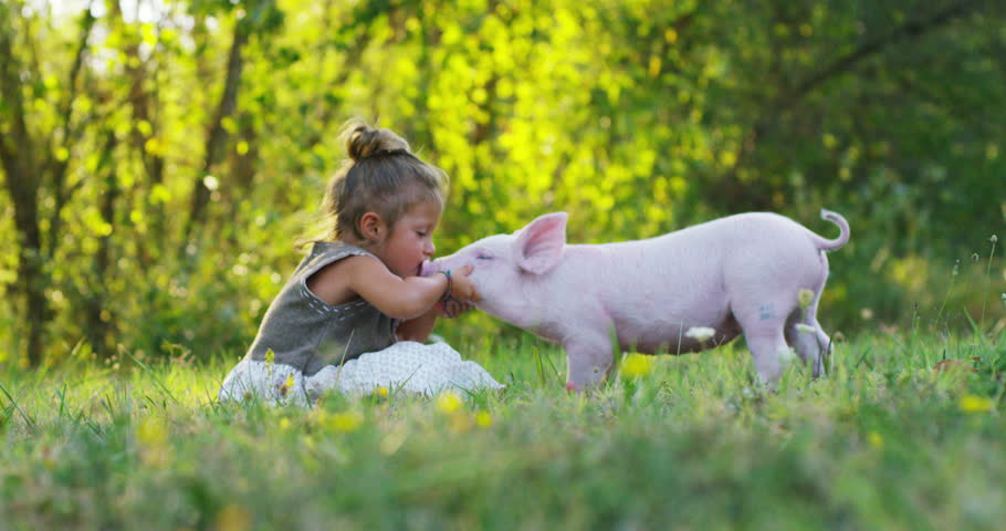 Slow motion of a little girl caresses and kisses a piglet on a green meadow surrounded by the nature. sustainability and a love of nature, respect for the world and love for animals.concept of vegan