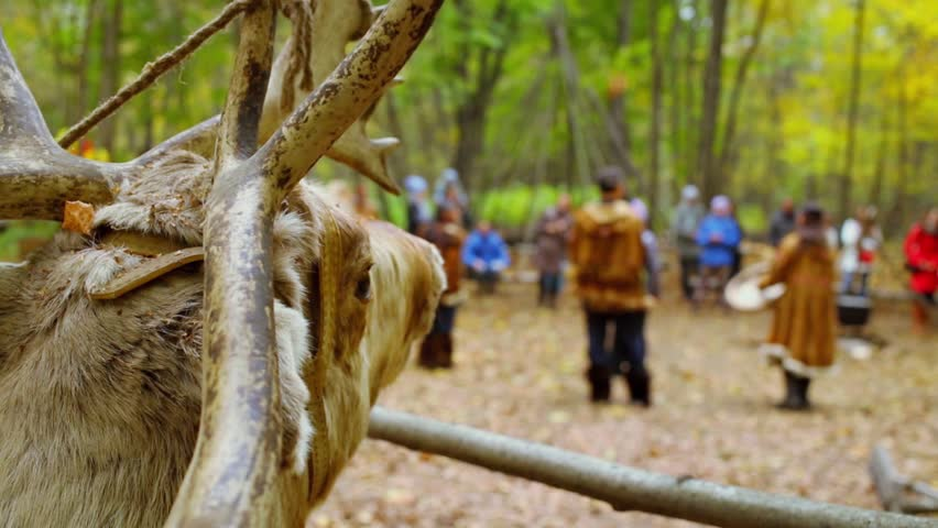 Head of stuffed deer and people clap hand at autumn day in forest