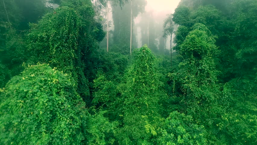 Drone footage of Borneo rain forest moving through the jungle