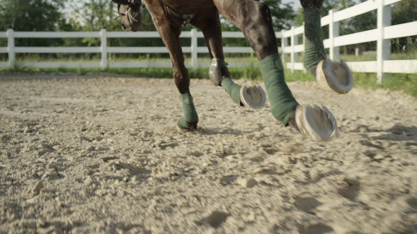 SLOW MOTION CLOSE UP: Beautiful big dark bay gelding cantering with his strong powerful legs wrapped in polos in sandy paddock. Dressage female rider horseback riding a mighty brown stallion horse