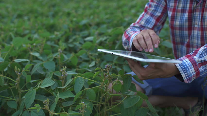 Farmer using digital tablet computer in cultivated soybean crops field, modern technology application in agricultural growing activity, selective focus | Shutterstock HD Video #19199521