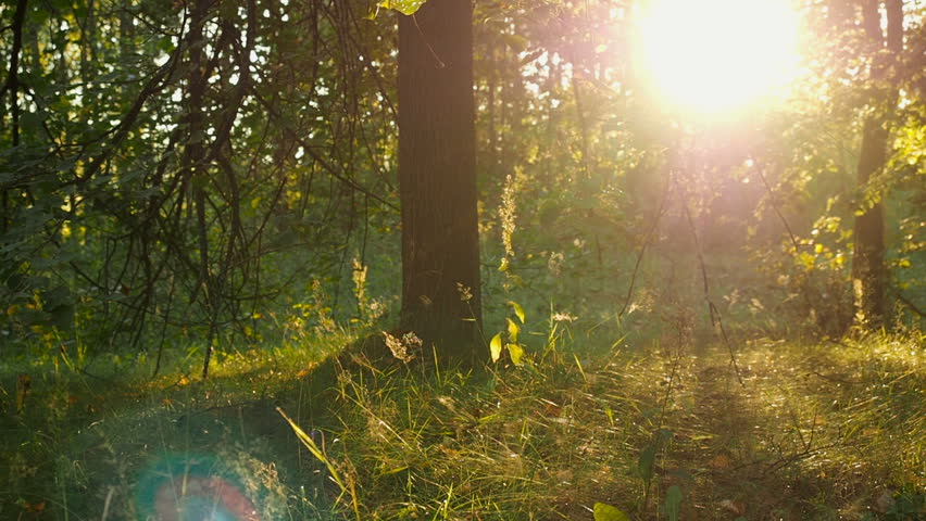 Sunset On The Edge Of The Forest | Shutterstock HD Video #19271539