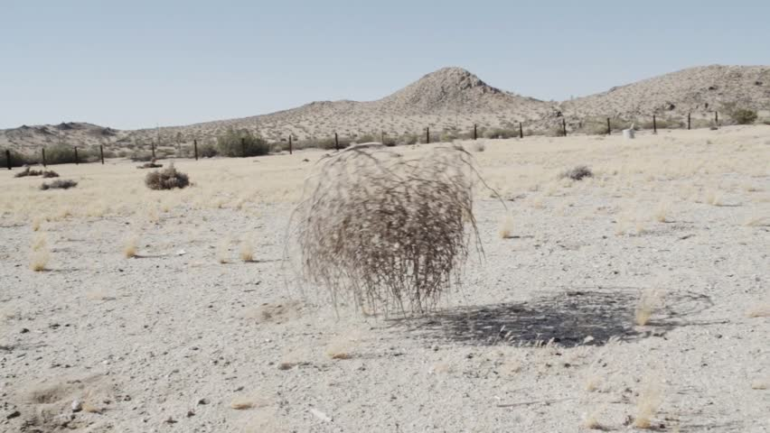 Tumbleweed  in the desert SLOWMOTION