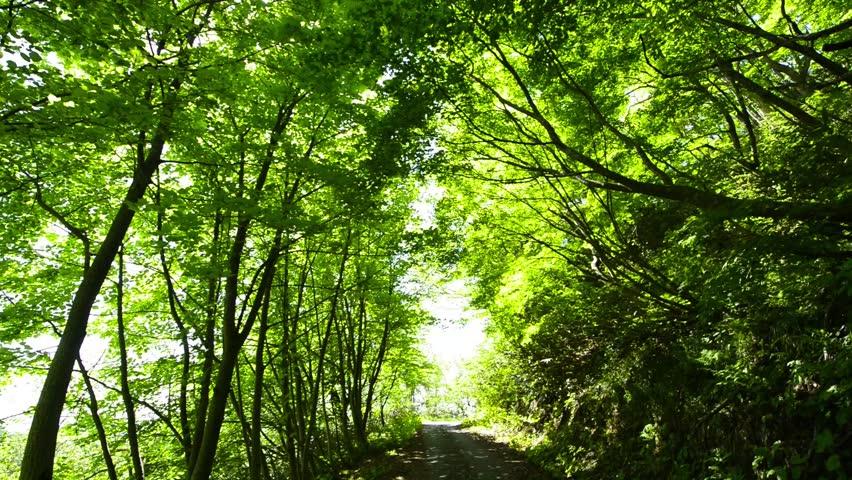 Fresh?green leaves in Hatibuse mountain | Shutterstock HD Video #19359334