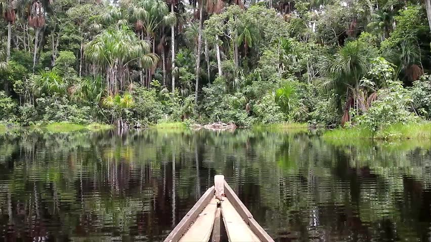 Paddling a dugout canoe in a swamp in the Peruvian Amazon (searching for a Green Anaconda)