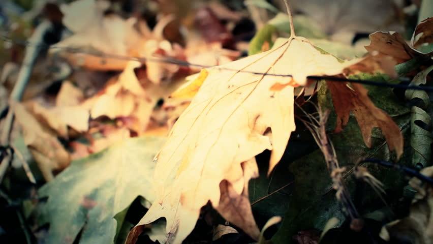 Autumn leaves | Shutterstock HD Video #1943710