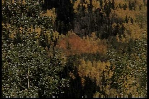 It is not uncommon to catch glimpses of game animals such as deer and elk during an autumn visit to Estes Park. (Ameri)
