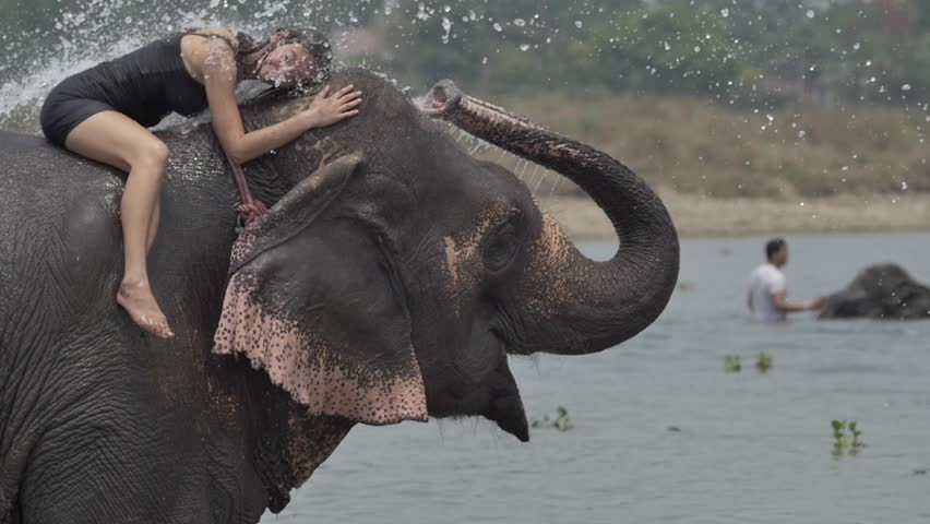 Girl have a shower on the elephant | Shutterstock HD Video #19487083