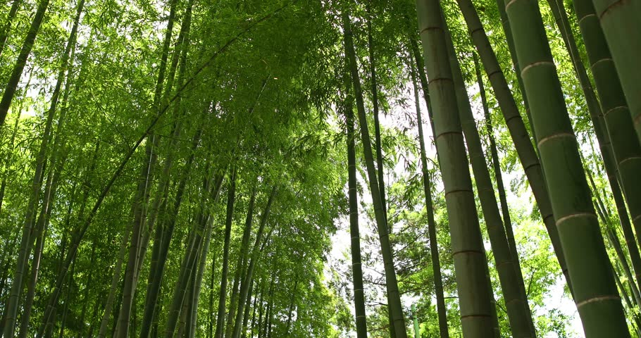 Fresh green at bamboo forest downtown Tokyo, Japan | Shutterstock HD Video #19809715