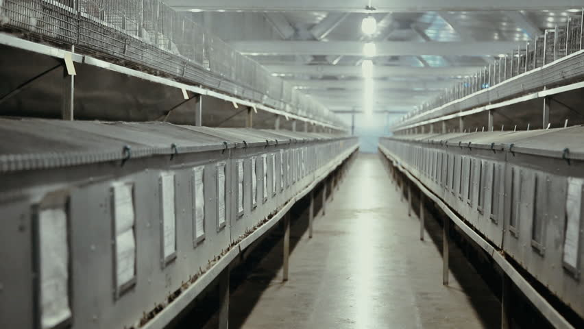 Cages for rabbits on the farm | Shutterstock HD Video #19849333