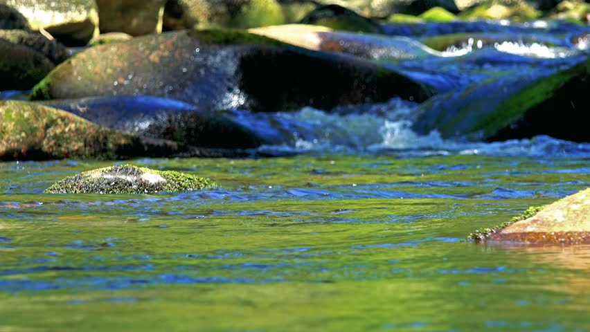 Closeup of river between stones in forest - detail of flowing water | Shutterstock HD Video #19858810
