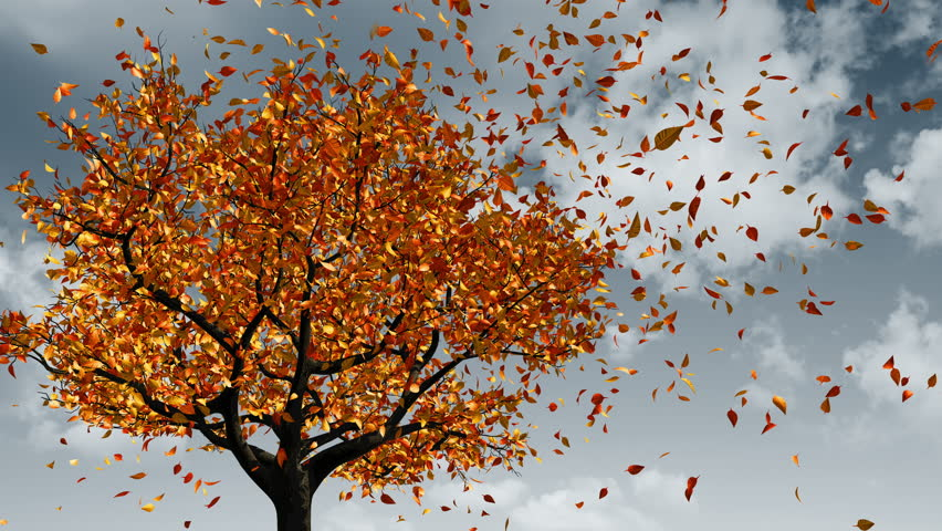 Concept Of Changing Of The Seasons From Spring To Autumn