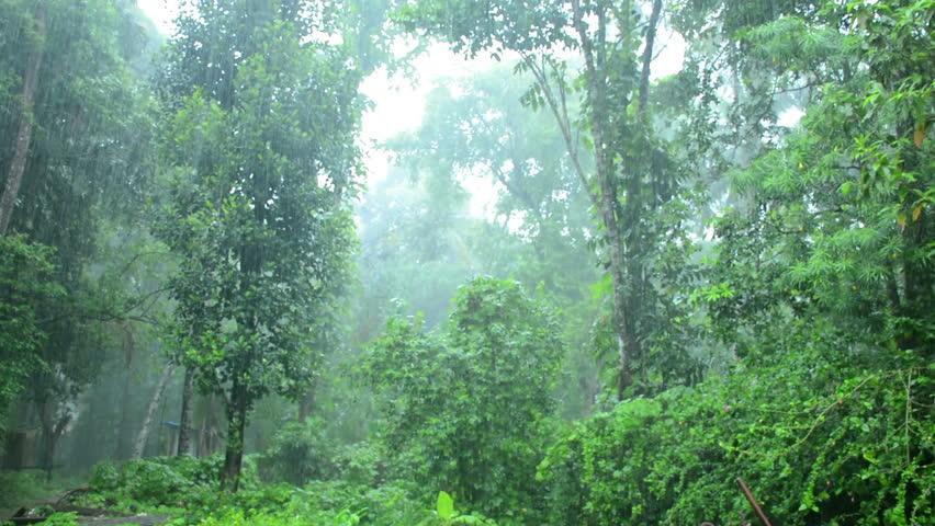 Heavily Raining | Shutterstock HD Video #19946485