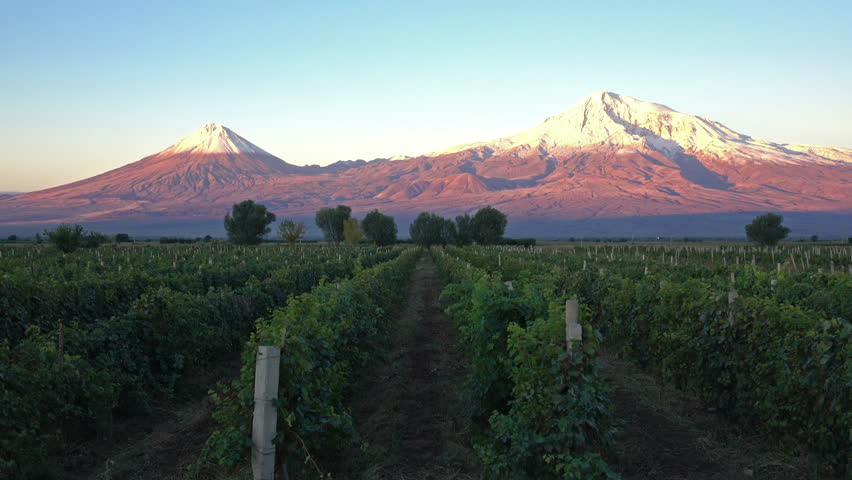 Timelapse of the snowcapped legendary Ararat mountain at sunrise, symbol of Armenia, with rows of vineyard in front