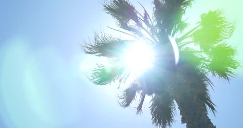 Low Angle Panning Shot of Palm Tree Silhouette Against Sun