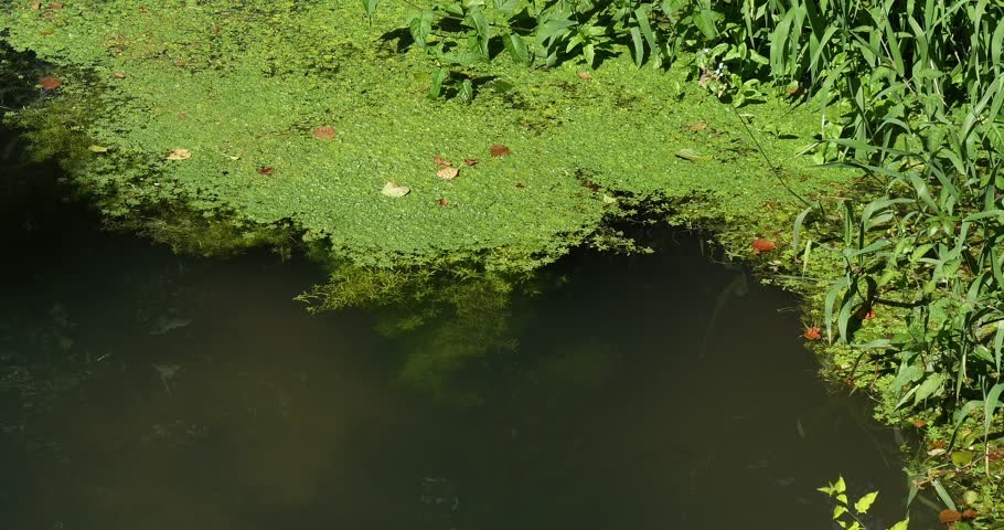 River with Aquatic Plants, Normandy, Real Time 4K | Shutterstock HD Video #20051986