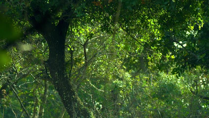 Carmel mountain forest shot in Israel. | Shutterstock HD Video #2012171