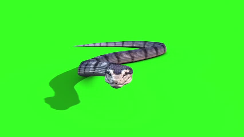 Snake Anaconda 3 - crawl on the ground - Animal Green Screen