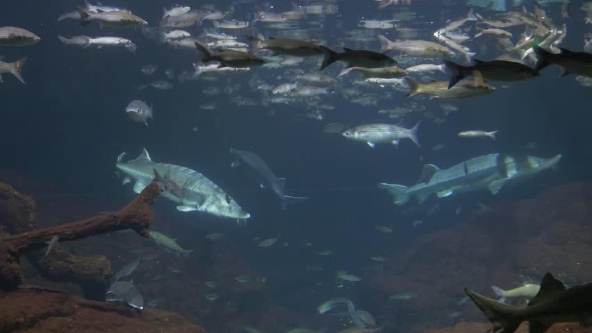 Fish in the aquarium in Barcelona #20241982