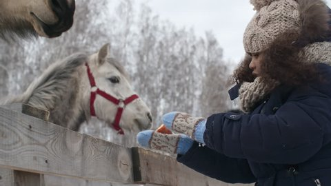 Curly African-American girl feeding horses with carrots on windy winter day