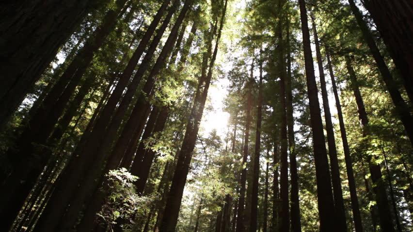 Sunlight Through a Tall Grove | Shutterstock HD Video #2031070