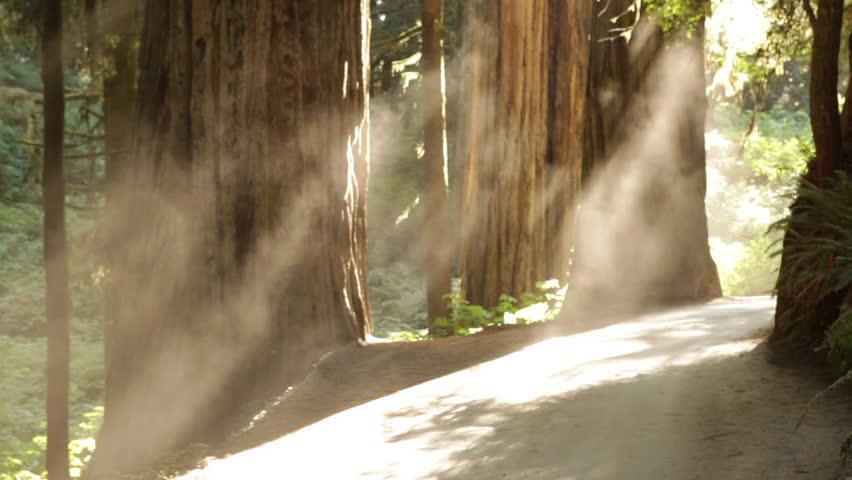 Sun on redwood path