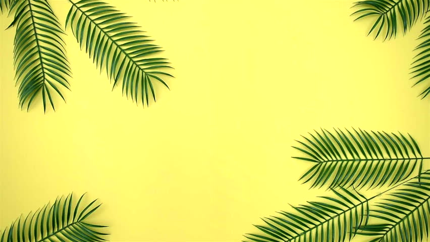 Yellow Background With Green Leaves Stock Footage Video 100 Royalty Free 20437837 Shutterstock Top view of paper cut green tropical leaves on yellow bright background with copy space, panoramic shot. yellow background with green leaves stock footage video 100 royalty free 20437837 shutterstock