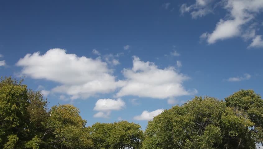Beautiful blue sky and trees   Shutterstock HD Video #20499421