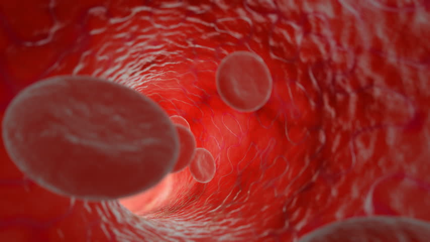 Beautiful Flying through realistic blood vessel with blood cells, HD 1080, seamless CG animation.