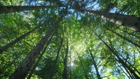 Beautiful deep green forest gleaming sunbeams woods stems trees low angle dolly nature sunny summer sun rays shimmer
