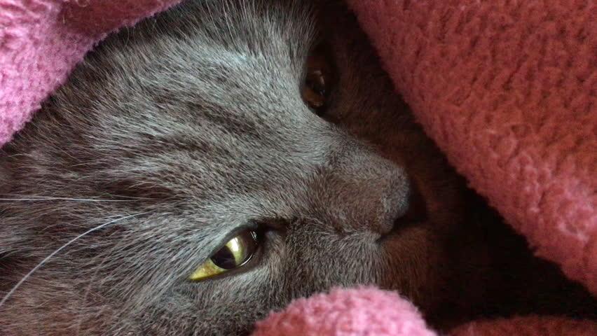 Cat muzzle closeup