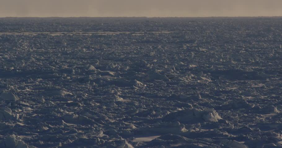 Polar bears on sunny sea ice walk through frame