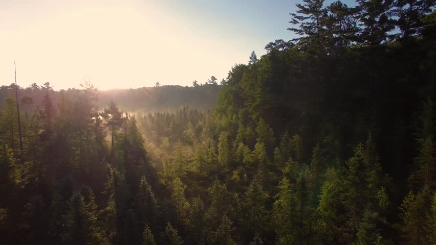 Aerial view flying low over mist and pine trees of northern Wisconsin at sunrise.
