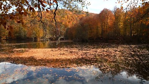 View of people in forest with fallen leaves and lake with reflection in Yedigoller. Yedigoller, also known seven lakes, is national park in Bolu, Turkey.