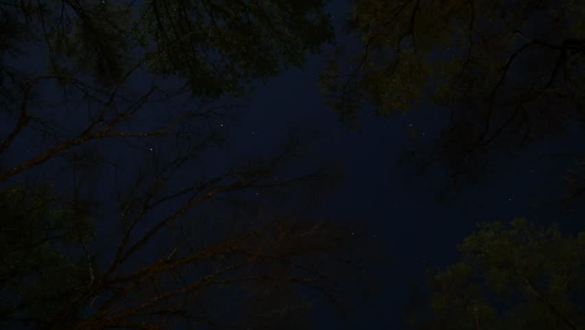 Timelapse of Stars and Clouds Through Forest Canopy, 4K | Shutterstock HD Video #21296488