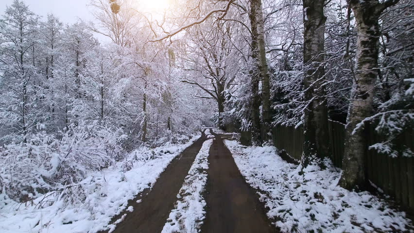 Aerial Video.Winter forest. Forest in snow.  Low flight between the snowy trees | Shutterstock HD Video #21389524