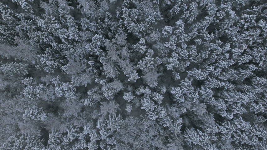 Aerial Video.Winter forest. Forest in snow. Flying over the snowy trees. | Shutterstock HD Video #21389530