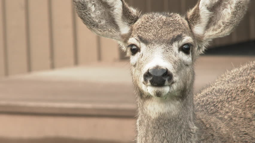 Close up of an adorable little deer looking into camera's lens. #21402319