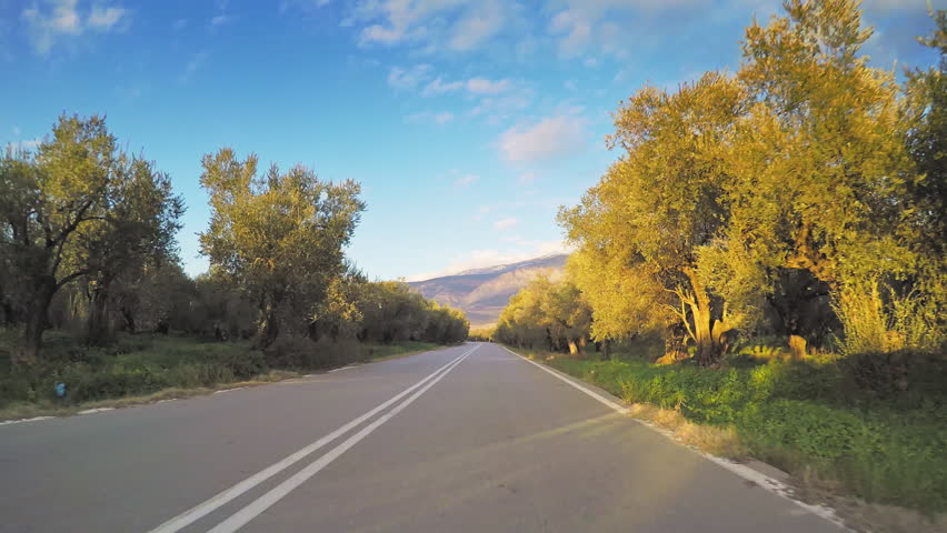 Olive groves orchard trees plantation POV vehicle drive car travel sunny day clear blue sky beautiful mediterranean countryside road agriculture point of view | Shutterstock HD Video #21455662