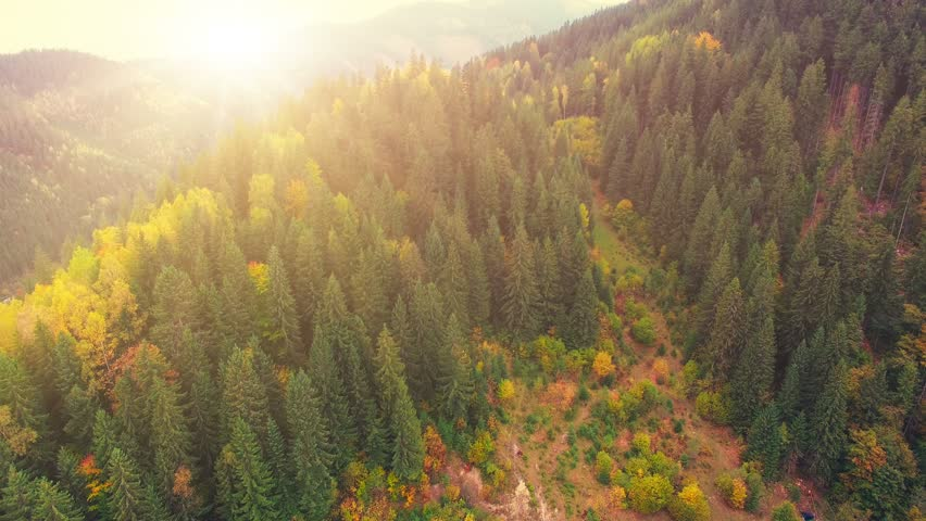 Aerial Drone Footage View: Flight over autumn mountains with forests, meadows and hills in sunset soft light. Carpathian Mountains, Ukraine, Europe. Majestic landscape. Beauty world. 4K resolution.