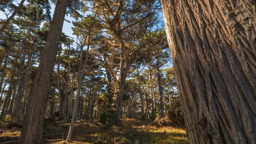 California big sur forest timelapse. America. USA.    Shutterstock HD Video #21733966