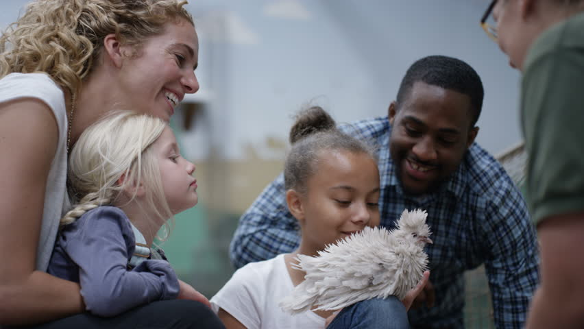 4K Parents and children at community farm, petting fluffy chick (UK-Oct 2016) | Shutterstock HD Video #21750511