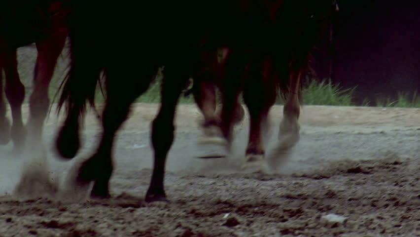 Running horses | Shutterstock HD Video #2195455