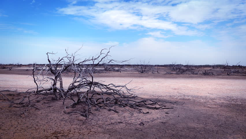 Parched dry tree in the barren abandoned landscape - Africa | Shutterstock HD Video #21990859