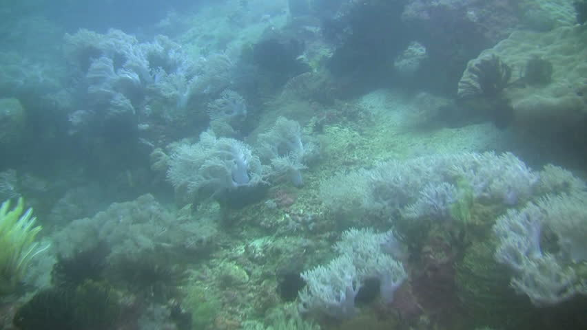 Coral reef outside the island of Mindoro in the Philippines #220051