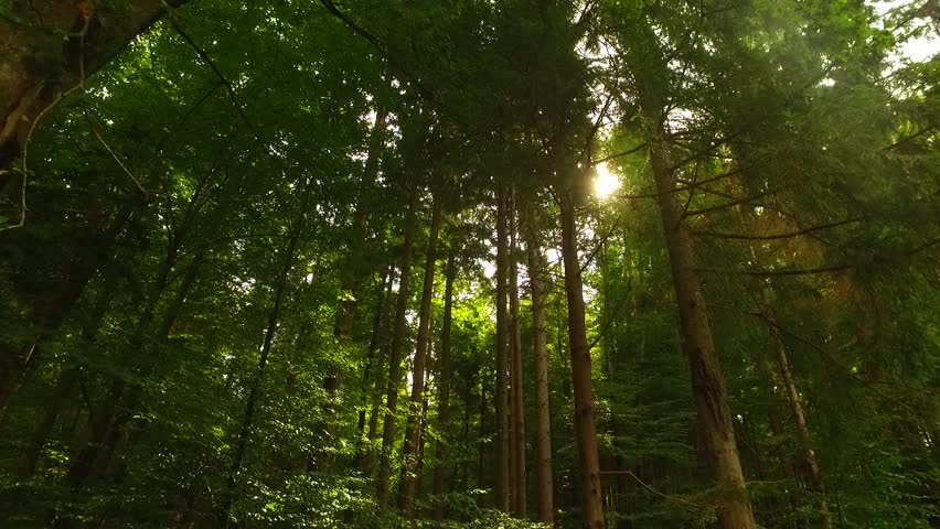 Crowns of trees with sun coming through. | Shutterstock HD Video #22262935