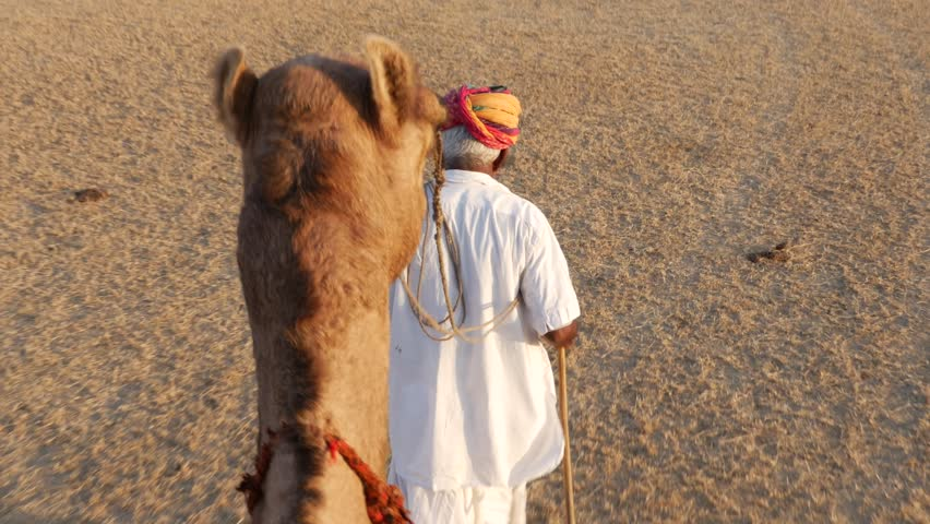 Indian Senior traveling with a camel in Jaisalmer Desert. | Shutterstock HD Video #22294495