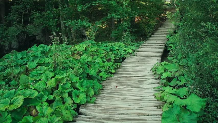 Lake in Plitvice National Park, Croatia HD | Shutterstock HD Video #22364281