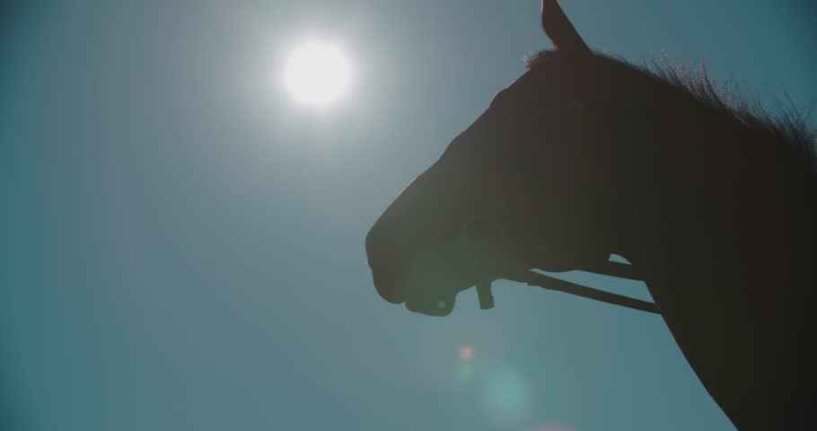 Silhouette of a thoroughbred racing stallion horse close-up in slow motion   Shutterstock HD Video #22390582