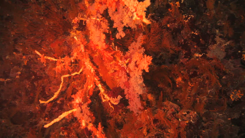 Massive piece of soft coral inside the cave | Shutterstock HD Video #2239516